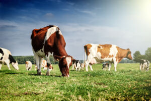 Curbing agricultural emissions